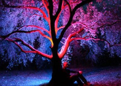 albero con figura seduta